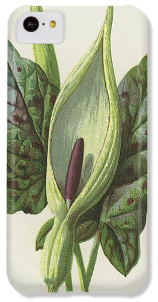 Cuckoo iPhone 5c Case - Arum, Cuckoo Pint by Frederick Edward Hulme