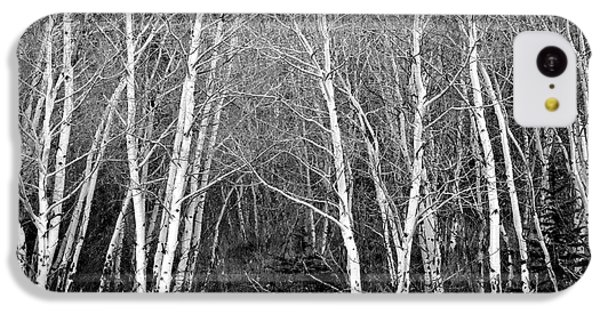 Aspen Forest Black And White Print IPhone 5c Case