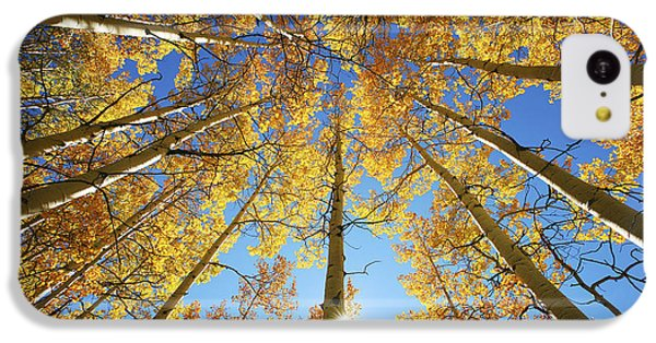 Aspen Tree Canopy 2 IPhone 5c Case by Ron Dahlquist - Printscapes