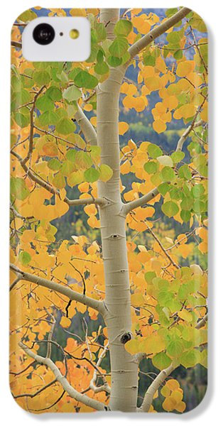 Aspen Watching You IPhone 5c Case