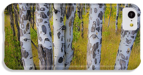 IPhone 5c Case featuring the photograph Aspens by Gary Lengyel