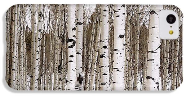 Mountain iPhone 5c Case - Aspens In Winter Panorama - Colorado by Brian Harig