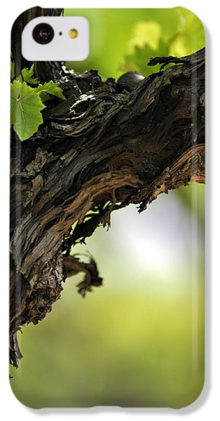 IPhone 5c Case featuring the photograph At Lachish Vineyard by Dubi Roman