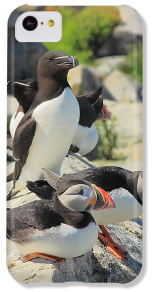 Atlantic Puffins And Razorbill IPhone 5c Case