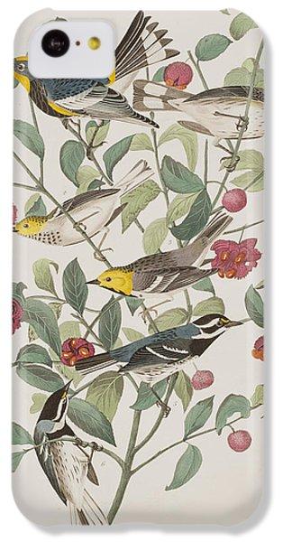 Audubons Warbler Hermit Warbler Black-throated Gray Warbler IPhone 5c Case