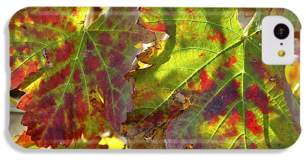 IPhone 5c Case featuring the photograph Autumn At Lachish Vineyards 2 by Dubi Roman