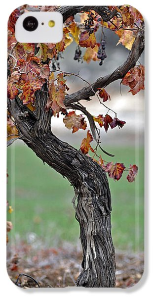 IPhone 5c Case featuring the photograph Autumn At Lachish Vineyards 3 by Dubi Roman