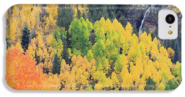 Autumn Glory IPhone 5c Case