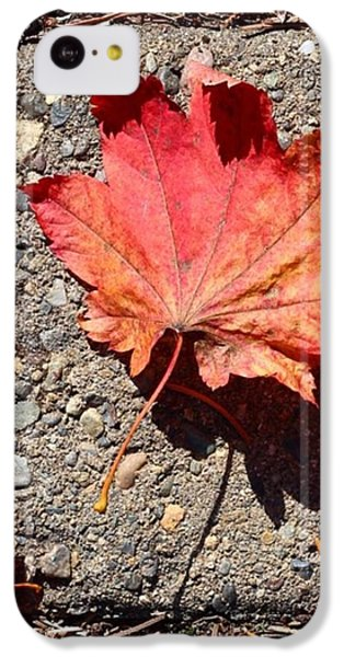 Autumn Is Here IPhone 5c Case