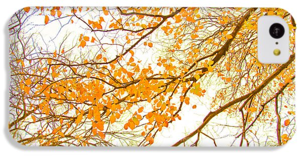 Featured Images iPhone 5c Case - Autumn Leaves by Az Jackson