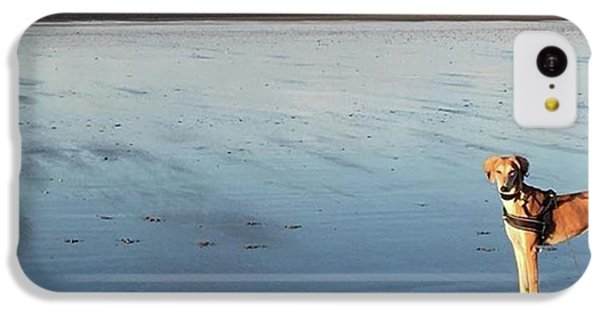 Ava's Last Walk On Brancaster Beach IPhone 5c Case by John Edwards