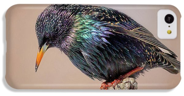 Backyard Birds European Starling Square IPhone 5c Case by Bill Wakeley