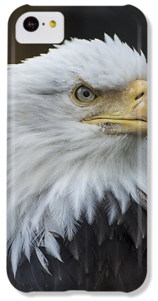 Bald Eagle Portrait IPhone 5c Case