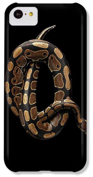 Ball Or Royal Python Snake On Isolated Black Background IPhone 5c Case by Sergey Taran