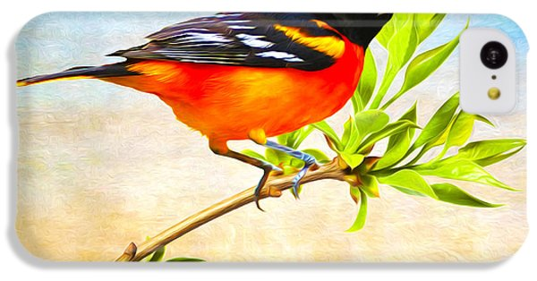 Oriole iPhone 5c Case - Baltimore Oriole Bird by Laura D Young