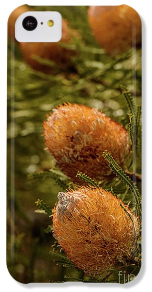 IPhone 5c Case featuring the photograph Banksia by Werner Padarin