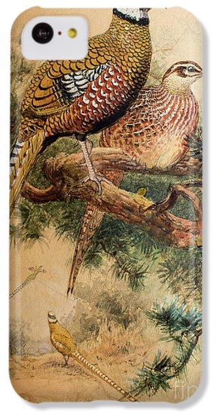 Bar-tailed Pheasant IPhone 5c Case