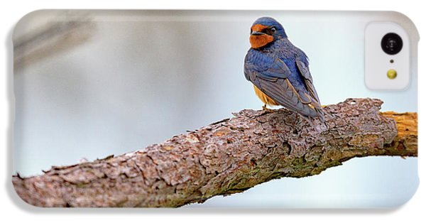 Barn Swallow On Assateague Island IPhone 5c Case