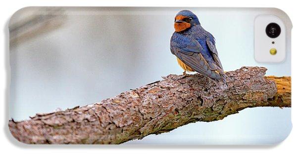 Barn Swallow On Assateague Island IPhone 5c Case by Rick Berk