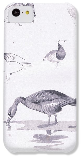 Barnacle And White Fronted Geese IPhone 5c Case