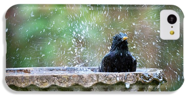 Starlings iPhone 5c Case - Bath Time by Tim Gainey