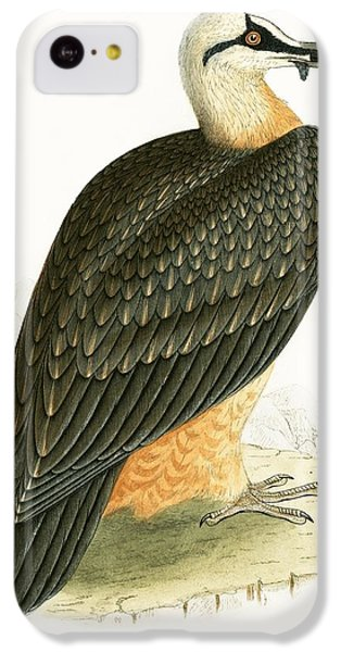 Bearded Vulture IPhone 5c Case