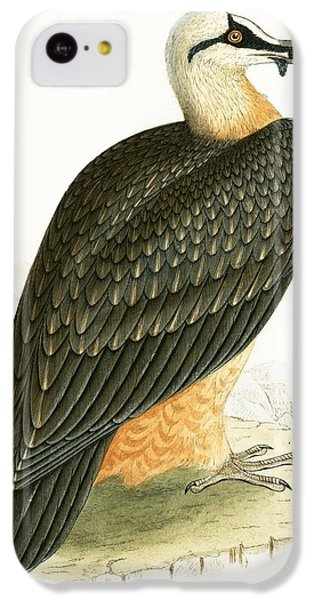Bearded Vulture IPhone 5c Case by English School