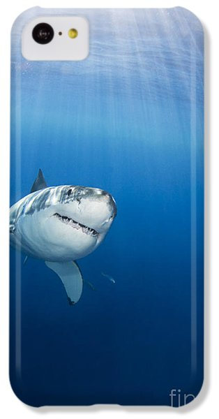 Sharks iPhone 5c Case - Beautiful Great White by Dave Fleetham - Printscapes