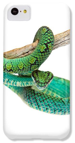 Brown Snake iPhone 5c Case - Beautiful Sri Lankan Palm Viper by Susan Schmitz
