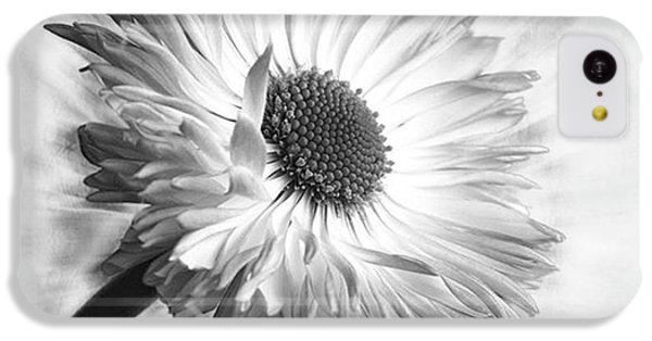 Bellis In Mono  #flower #flowers IPhone 5c Case by John Edwards