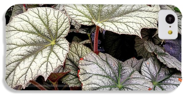 Big Begonia Leaves IPhone 5c Case