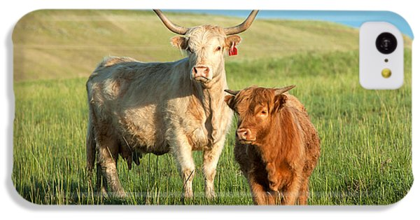 Cow iPhone 5c Case - Big Horn, Little Horn by Todd Klassy