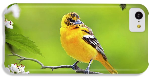 Bird And Blooms - Baltimore Oriole IPhone 5c Case by Christina Rollo