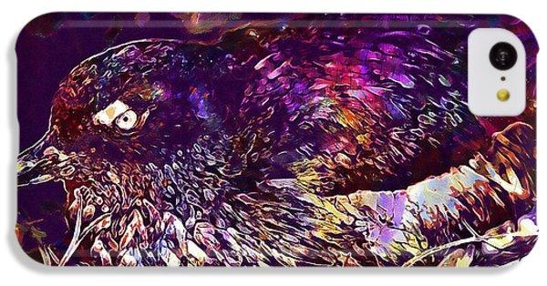 Bird Cassins Auklet Crested Birds  IPhone 5c Case