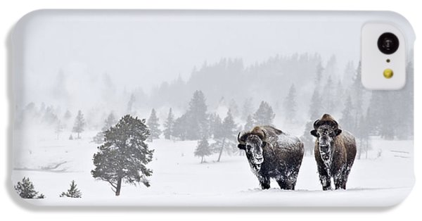 Bison In The Snow IPhone 5c Case