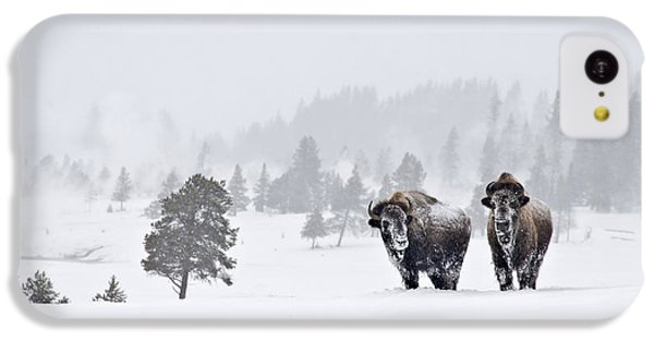 IPhone 5c Case featuring the photograph Bison In The Snow by Gary Lengyel