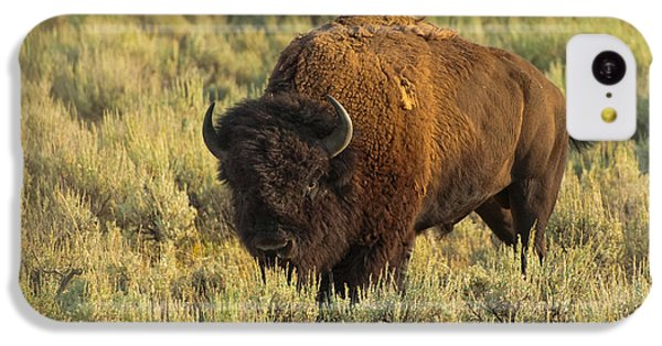 Bison IPhone 5c Case
