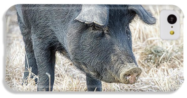 IPhone 5c Case featuring the photograph Black Pig Close-up by James BO Insogna