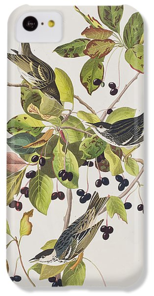 Black Poll Warbler IPhone 5c Case by John James Audubon