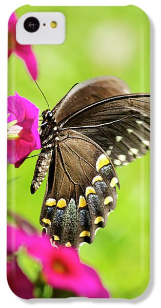IPhone 5c Case featuring the photograph Black Swallowtail Butterfly by Christina Rollo