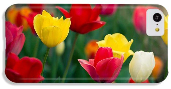 Blossom IPhone 5c Case