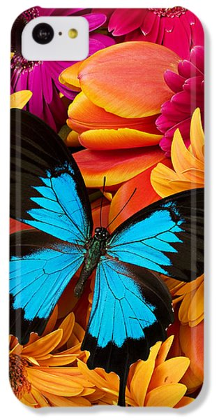 Blue Butterfly On Brightly Colored Flowers IPhone 5c Case