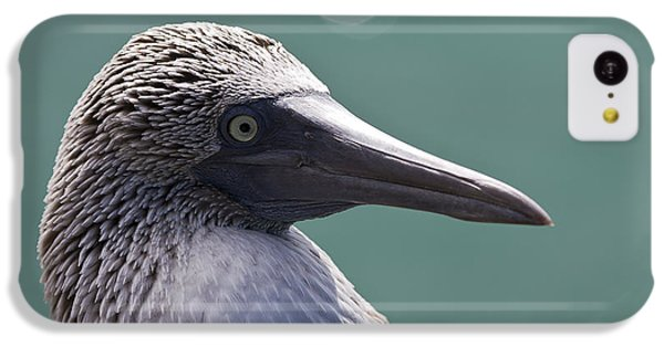Blue Footed Booby II IPhone 5c Case by Dave Fleetham