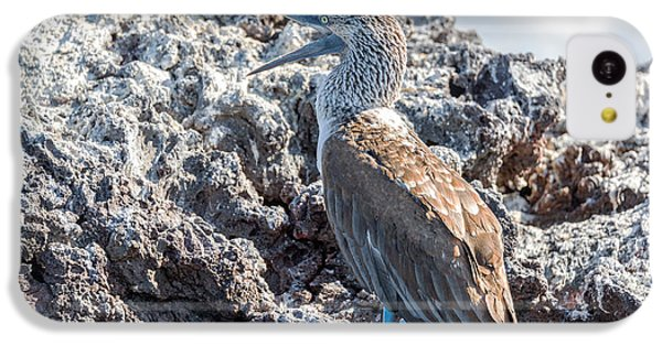 Blue Footed Booby IPhone 5c Case by Jess Kraft