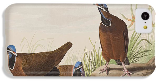 Blue Headed Pigeon IPhone 5c Case by John James Audubon
