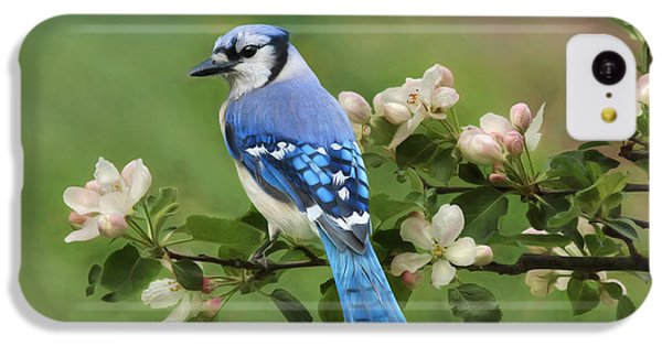 Bluejay iPhone 5c Case - Blue Jay And Blossoms by Lori Deiter