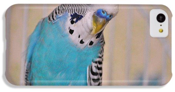 Parakeet iPhone 5c Case - Blue Parakeet by Jai Johnson