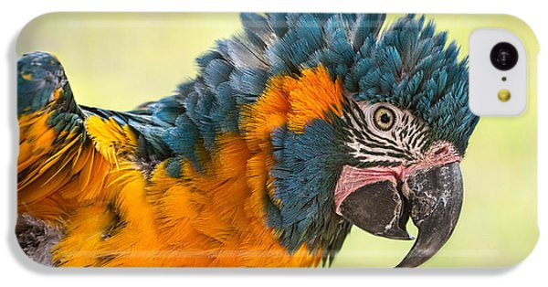 Blue Throated Macaw IPhone 5c Case