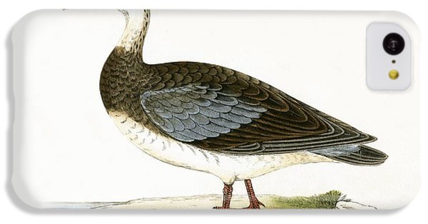 Blue Winged Goose IPhone 5c Case by English School