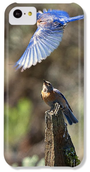Bluebird Buzz IPhone 5c Case by Mike Dawson